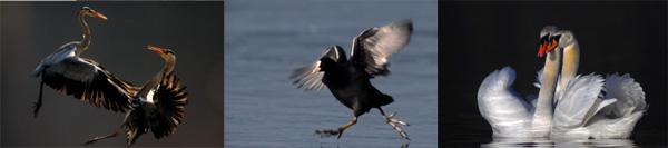Ausstellung 3: Leben am Wasser - Die Welt der Wasservögel